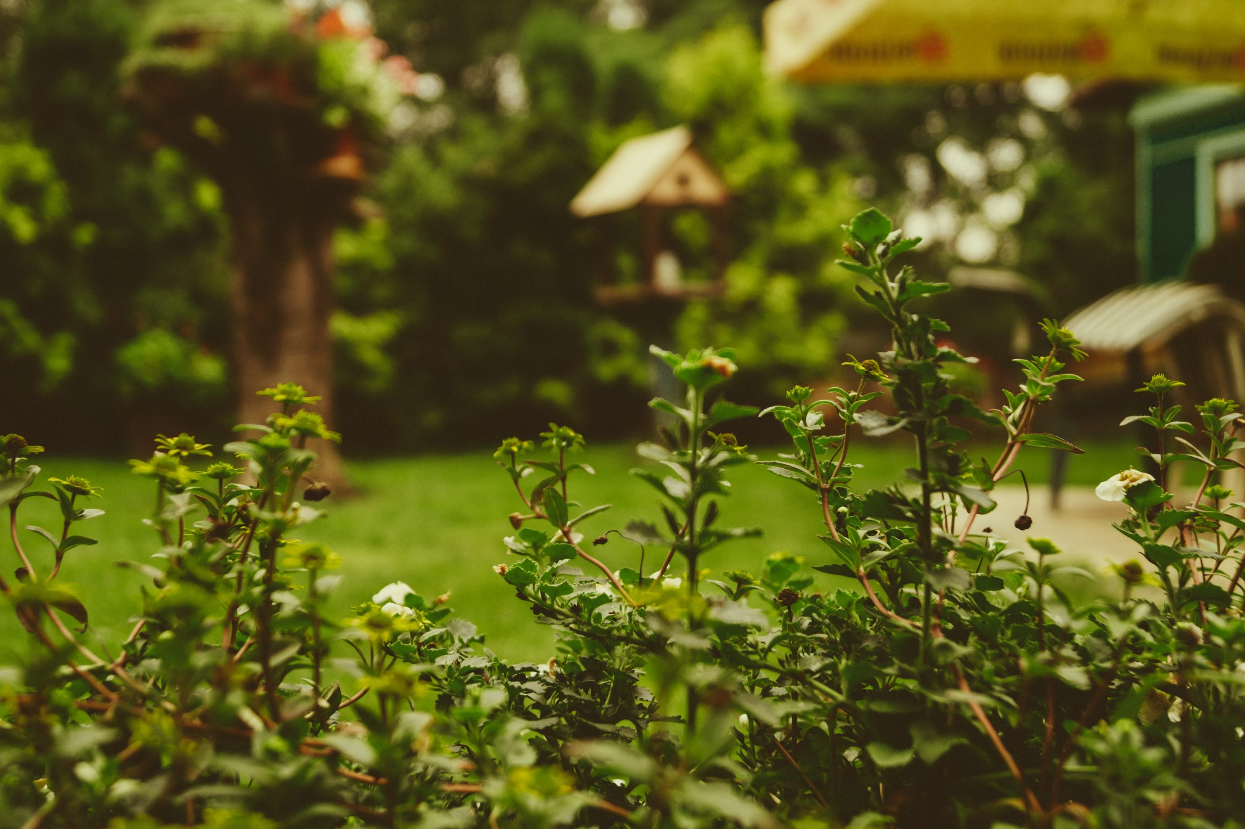 Make Your Garden Loved By Nature